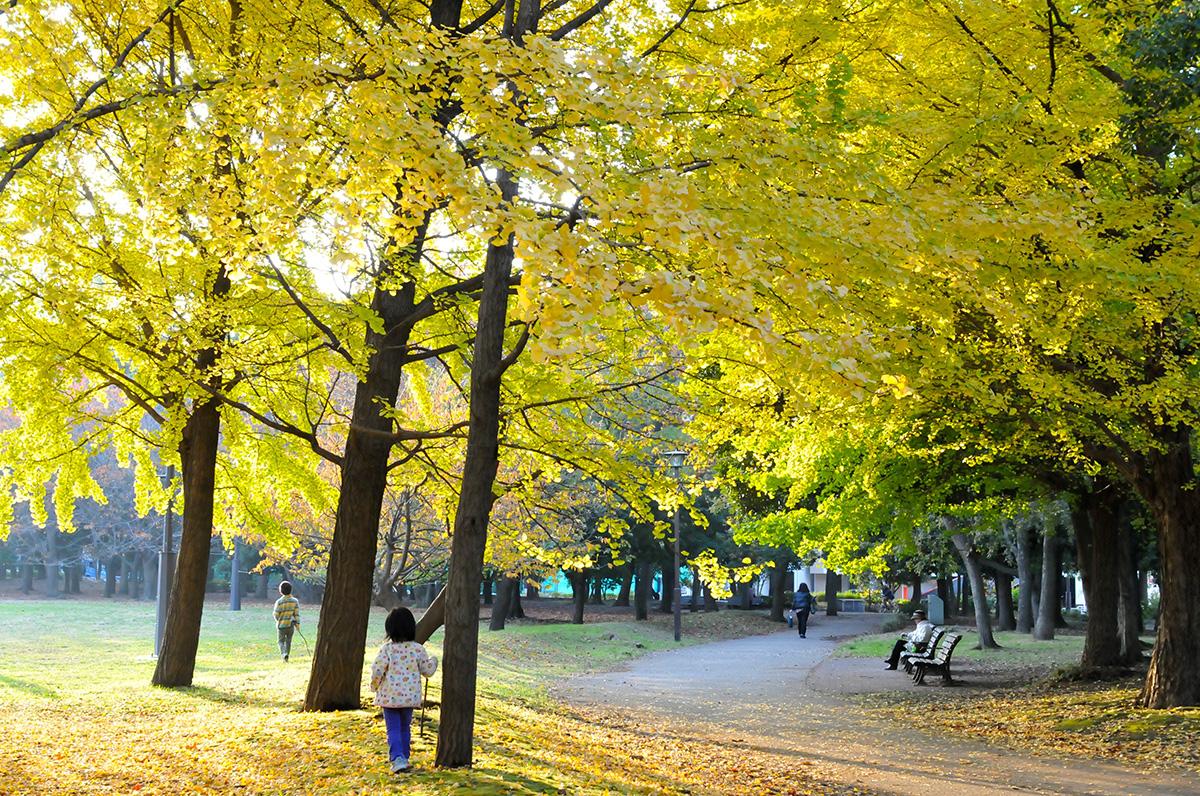 만추의 기요스미 공원