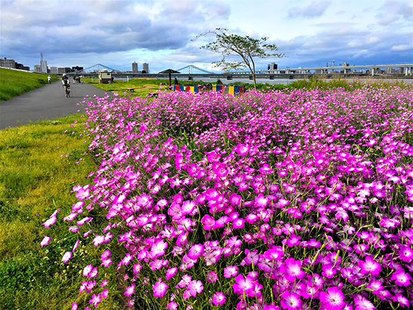 Arakawa waterside park of early summer