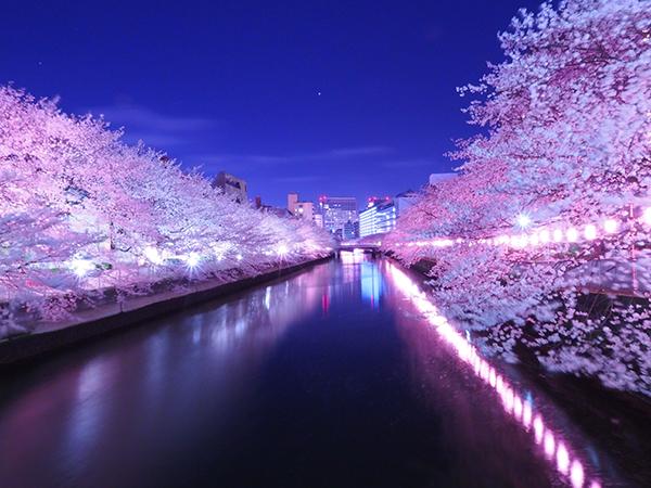春天的KIRAMEKI