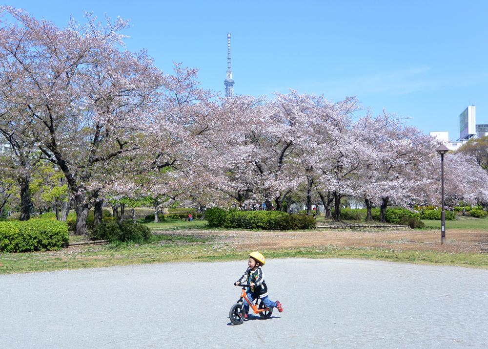 We run in cherry blossoms
