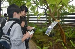 Yumenoshima Tropical Greenhouse Dome <br>3 moon holding event