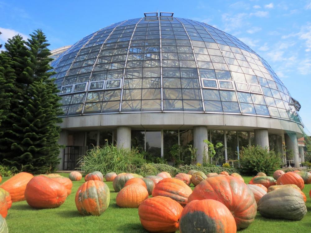 梦之岛热带植物馆<br>10月开赛活动