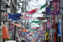 The 25th Kameido, downtown area carp streamer Festival