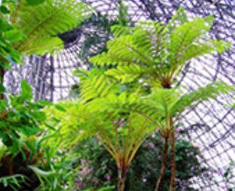梦之岛热带植物馆<br>5月开赛活动