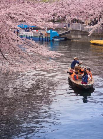 오요코가와
