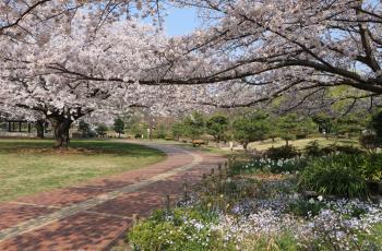 가메이도 중앙 공원