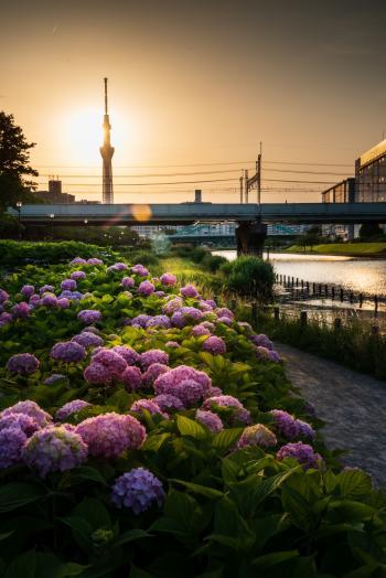 前中川水边公园(龟户)