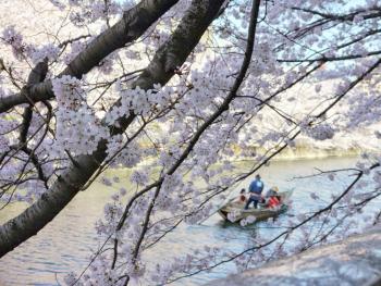 The Oyoko River