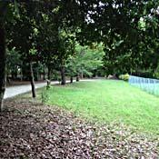 青海中央埠頭公園
