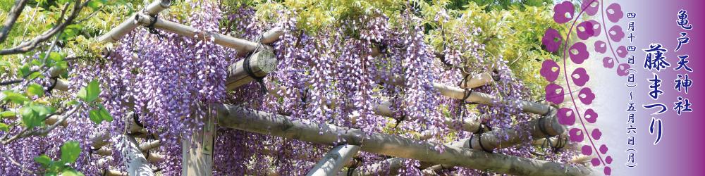 카메이도 천신 등나무 축제